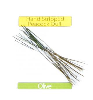 Stripped Peacock Quills - Olive Veniard