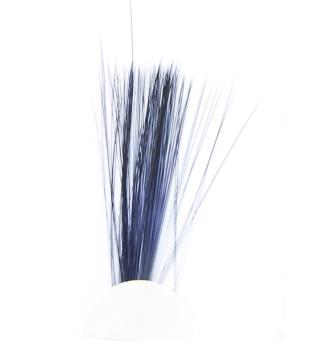 Tail Fibres - Black Veniard