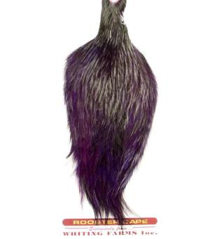 Whiting Coq De Leon Rooster Cape Badger/Purple